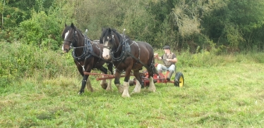 Horse drawn mower at Hutchinson's Bank